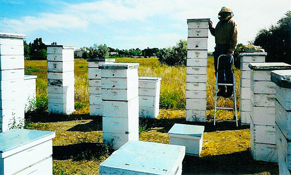 Tom Theobald standing on a stepladder next to one of his two-queen colonies in Boulder County, Colorado, September 2002.